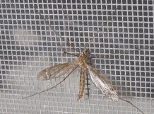 Insectenraam